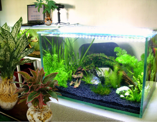Chuyên cung cấp bể cá cảnh, bể cá thủy sinh