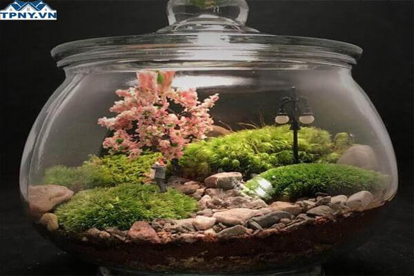 Khu vườn trong bình thủy tinh