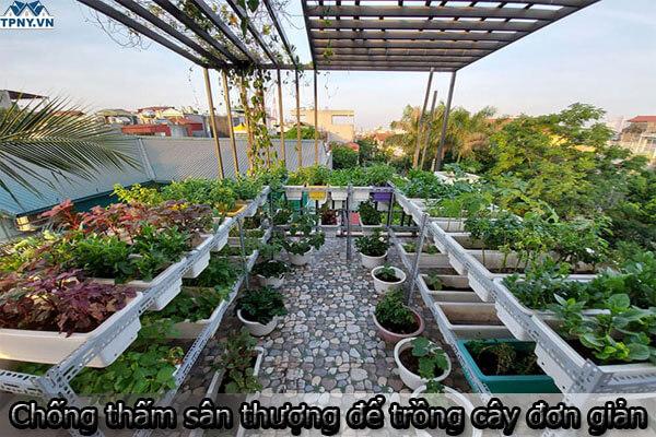 Chống thấm sân thượng để trồng cây bằng các phương pháp đơn giản